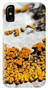 31 IPhone Case