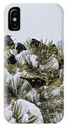 4 And 20 Blackbirds IPhone Case