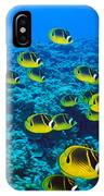 Raccoon Butterflyfish IPhone Case