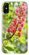Aesculus X Carnea, Or Red Horse-chestnut Flower IPhone Case