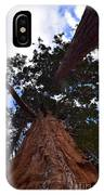 Giant Sequoia Trees IPhone Case