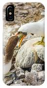 Nazca Booby In Galapagos IPhone Case