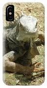 A Glaring Common Iguana On Aruba's Wild Side IPhone Case