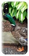 A Male Mallard Duck 4 IPhone Case