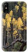A Ponderosa Pine Tree Among Aspen Trees IPhone Case