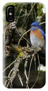 A Western Bluebird In A Tree IPhone Case