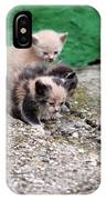 Abandoned Kittens On The Street IPhone Case