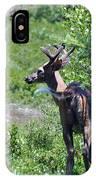 Acadia Buck 2 IPhone Case