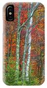 Adirondack Birches In Autumn IPhone Case