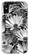 African Daisies In Black And White IPhone Case