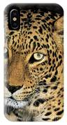 African Leopard Panthera Pardus Captive Wildlife Rescue IPhone Case