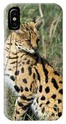 African Serval In Ngorongoro Conservation Area IPhone Case