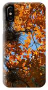 Afternoon Light On Maple Leaves IPhone Case