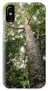 Agathis Borneensis Tree IPhone Case