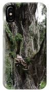 Aging Oak Tree IPhone Case