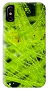 Algae Spirogyra Sp., Lm IPhone Case