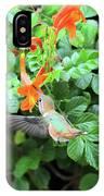 Allen's Hummingbird In Cape Honeysuckle IPhone Case