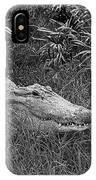 American Alligator 2 Bw IPhone Case