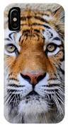 Amur Siberian Tiger IPhone Case
