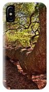 Angel Oak Tree 003 IPhone Case