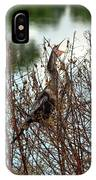 Anhinga Calling IPhone Case