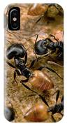 Ant Crematogaster Sp Group IPhone Case