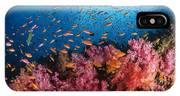 Anthias Fish And Soft Corals, Fiji IPhone Case