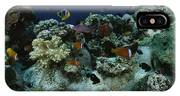 Anthias Fish, Anemonefish And Basslets IPhone Case