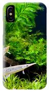 Aquarium Fish Couple In Zoo IPhone Case
