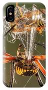 Argiope Spider Wrapping A Hornet IPhone Case