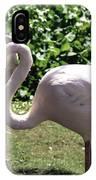 Arizona Flamingos IPhone Case