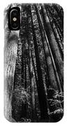 Armstrong National Park Redwoods Filtered Sun Black And White IPhone Case