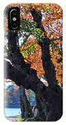 Asian Cherry Trees Of Fall IPhone Case