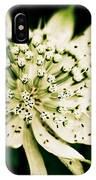 Astrantia In Bloom IPhone Case