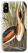 Audubon: Bittern IPhone Case