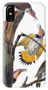 Audubon: Flicker IPhone Case