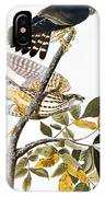 Audubon: Hawk IPhone Case
