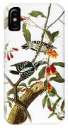 Audubon: Woodpecker, 1827 IPhone Case