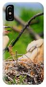 Baby Anhinga Chicks IPhone Case