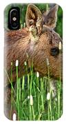 Baby Moose IPhone Case