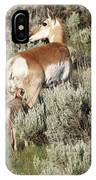 Baby Pronghorn Feeding IPhone Case