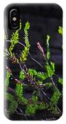 Back-lit Conifer Branches IPhone Case