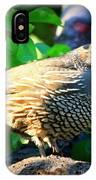 Backyard Garden Series - Quail In A Pear Tree IPhone Case