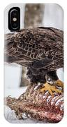 Bald Eagle At The Buffet IPhone Case