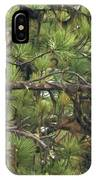 Bald Eagle In A Pine Tree, No. 4 IPhone Case