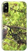 Bald Eagle In A Pine Tree, No. 5 IPhone Case