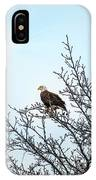 Bald Eagle In A Tree Enjoying The Sunlight IPhone Case