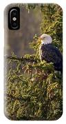 Bald Eagle In Pine IPhone Case