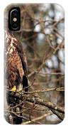 Bald Eagle Juvenile 2 IPhone Case