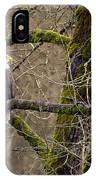 Bald Eagle On Mossy Branch IPhone Case
